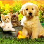 A-t-on vraiment un avantage à prendre une assurance animale ?