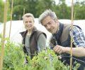 Le frugalisme, pour une retraite à 40 ans